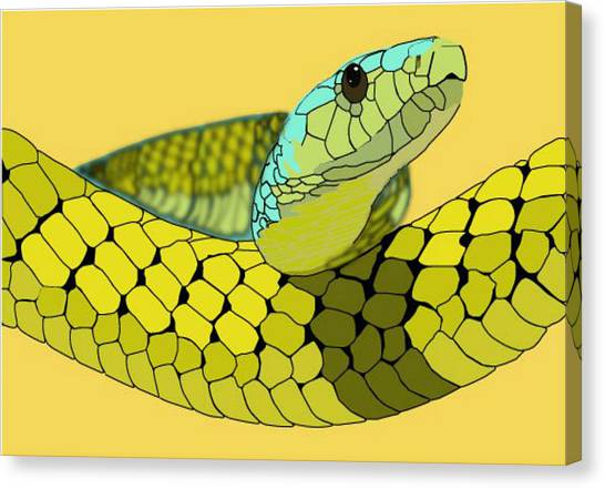 Columbian Snake Canvas Print by Katelyn Sherman