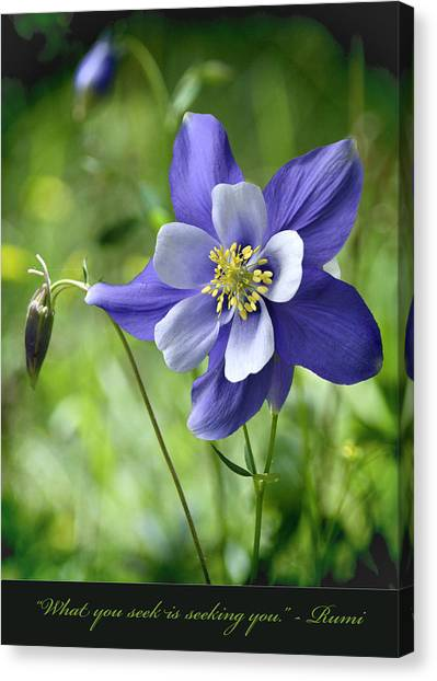 Columbine Card  Canvas Print