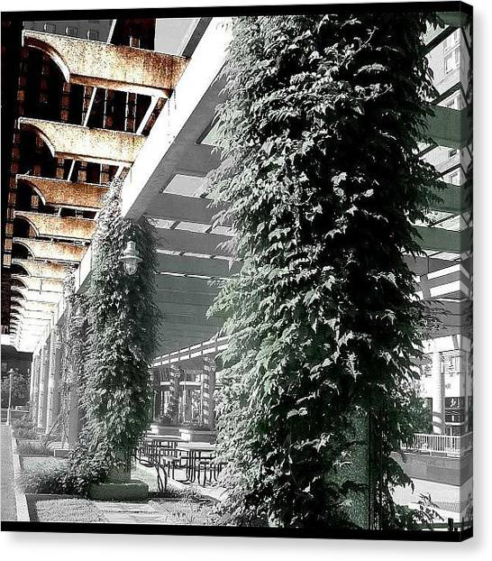 Arbor Canvas Print - #column, #arbor, #pergola, #vine by Chrisi Spooner