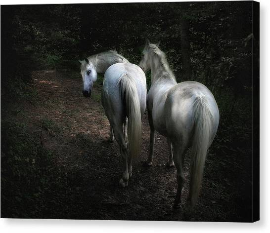White Horse Canvas Print - Come .. by Holger Droste