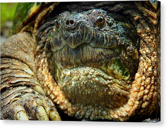 Snapping Turtles Canvas Print - Come A Little Closer Please by Michael Eingle
