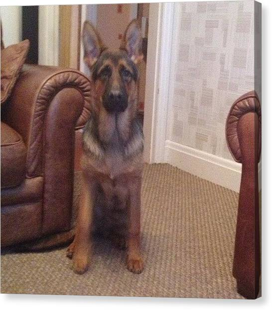 Prince Canvas Print - 'come Play?' #gsd #gsdlove by Sean OCallaghan