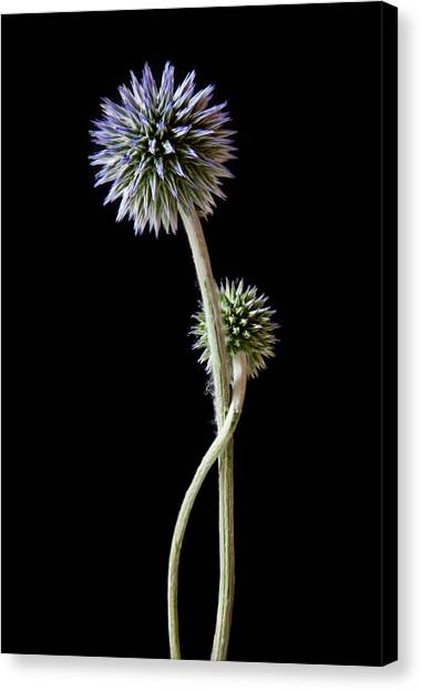 Sublime Canvas Print - Comfort by Maggie Terlecki