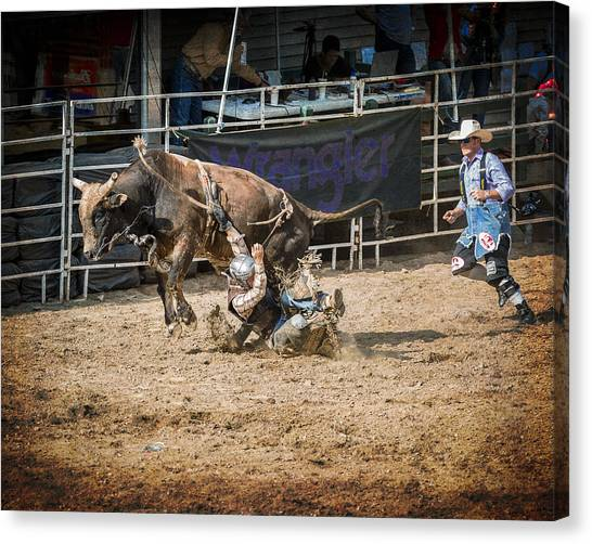 Bull Riding Canvas Print - Coming Down by Eduard Moldoveanu