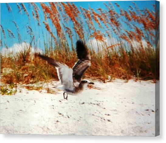 Windy Seagull Landing Canvas Print