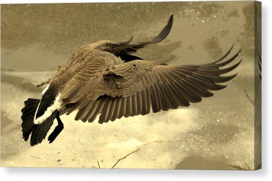 Coming In For A Landing Canvas Print