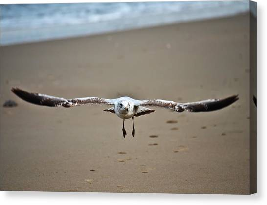 Coming In For A Landing  Canvas Print by Sabrina  Hall