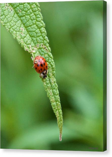 Coming To The End Of The Leaf Canvas Print