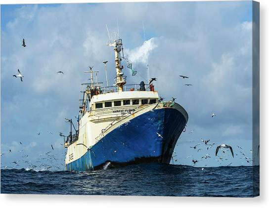 Commercial Purse-sein Trawler Canvas Print by Peter Chadwick