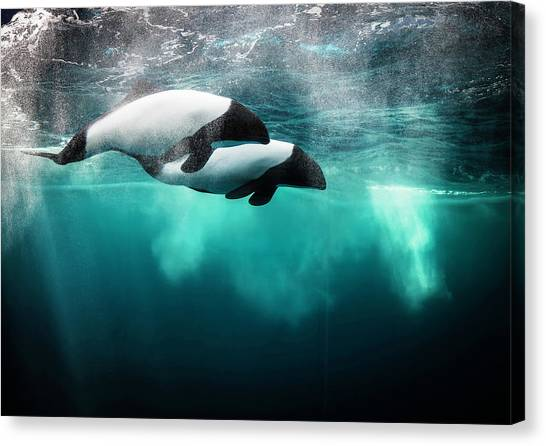 Tanks Canvas Print - Commersona???s Dolphin by David Williams
