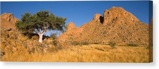 Namib Desert Canvas Print - Commiphora Spp Tree In A Desert by Panoramic Images