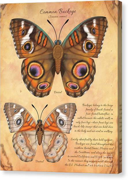 Common Buckeye Butterfly  Canvas Print by Tammy Yee