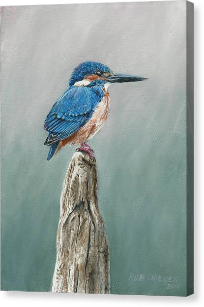 Kingfisher Canvas Print - Common Kingfisher by Dreyer Wildlife Print Collections