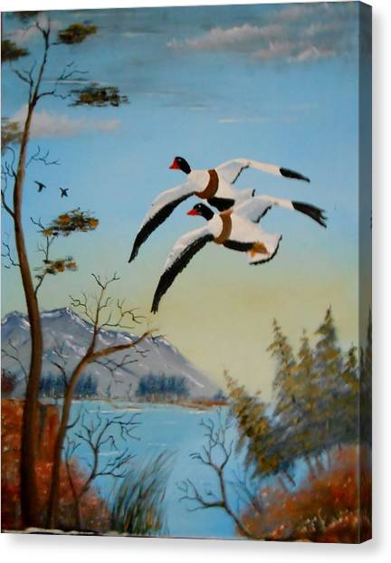 Common Shelducks Canvas Print