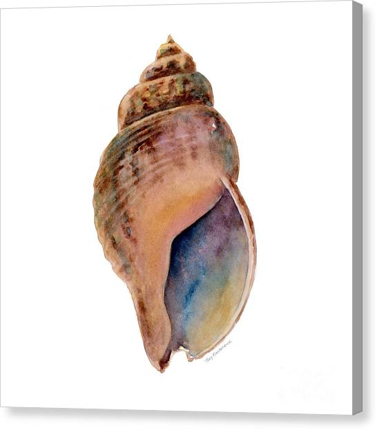 Conch Shells Canvas Print - Common Whelk Shell by Amy Kirkpatrick