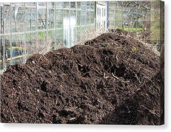 Local Food Canvas Print - Compost Heap by Ashley Cooper