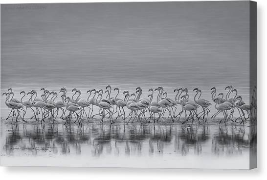 Kuwait Canvas Print - Comrades by Ahmed Thabet