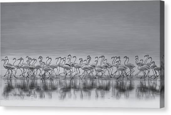 Sea Bird Canvas Print - Comrades by Ahmed Thabet
