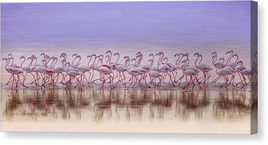 Kuwait Canvas Print - Comrades In Color by Ahmed Thabet