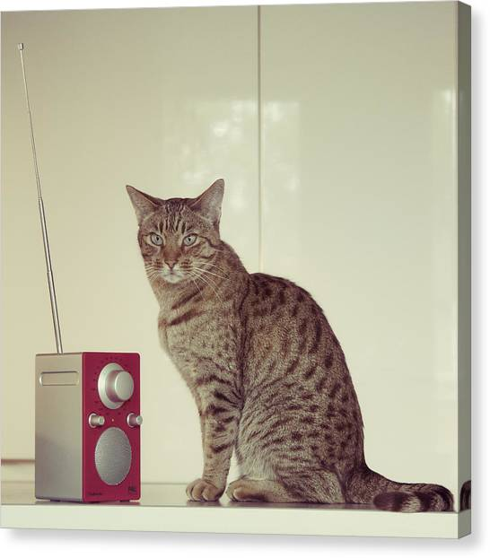 Ocicats Canvas Print - Concentrated Listener by Ari Salmela
