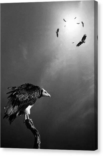 Flight Canvas Print - Conceptual - Vultures Awaiting by Johan Swanepoel