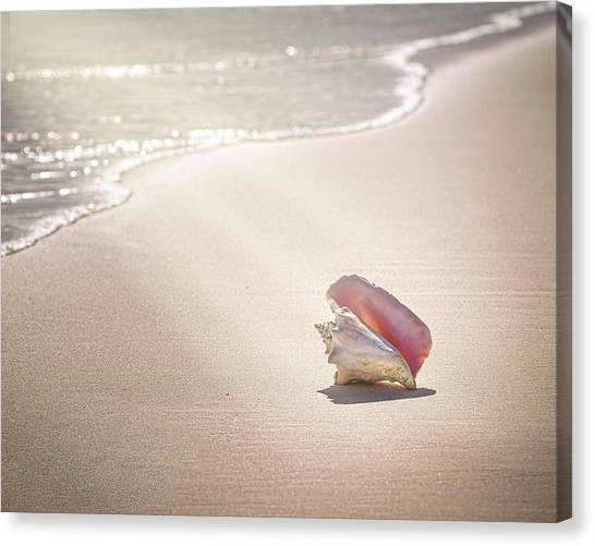 Conch Shell On Pink Sand Beach, Harbour Canvas Print