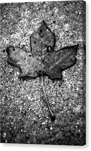 Concrete Leaf Canvas Print