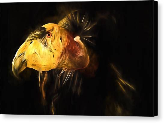 Condors Canvas Print - Condor Americana - Don't Mess Around With Me by Georgiana Romanovna
