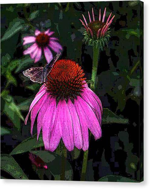 Cone Flower And Butterfly Canvas Print