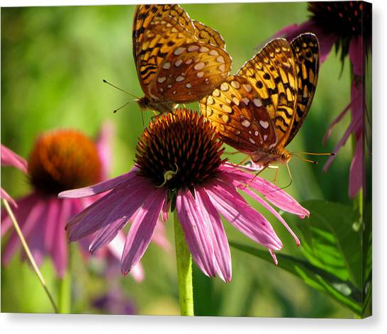 Coneflower Butterflies Canvas Print