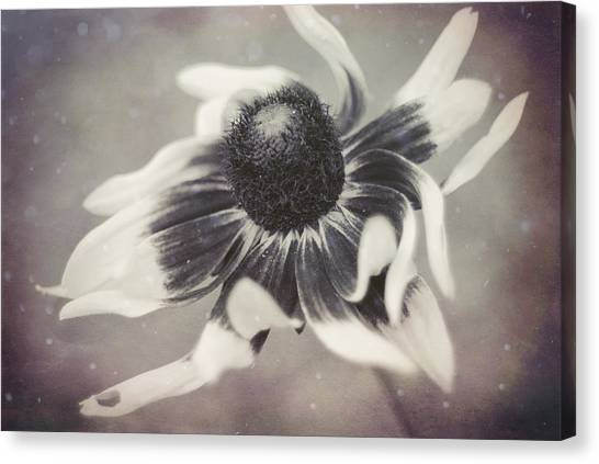 Coneflower In Monochrome Canvas Print
