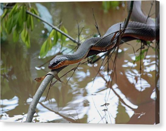 Poisonous Snakes Canvas Print - Congaree Swamp Snake by Suzanne Gaff