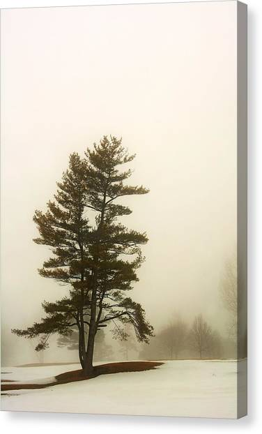 Coniferous Tree In Winter Canvas Print