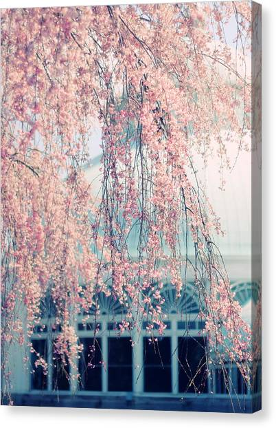 Tree Blossoms Canvas Print - Conservatory  In Spring by Jessica Jenney