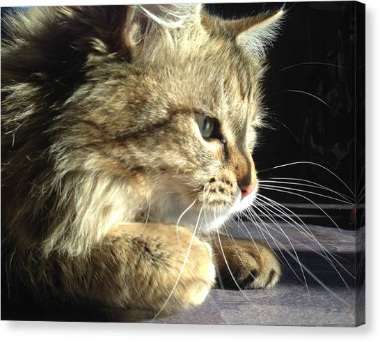 Canvas Print - Contemplating by Christine Rivers