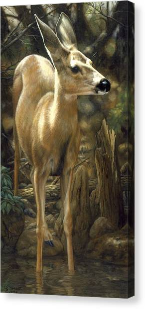 Baby Deer Canvas Print - Mule Deer - Contemplation by Crista Forest