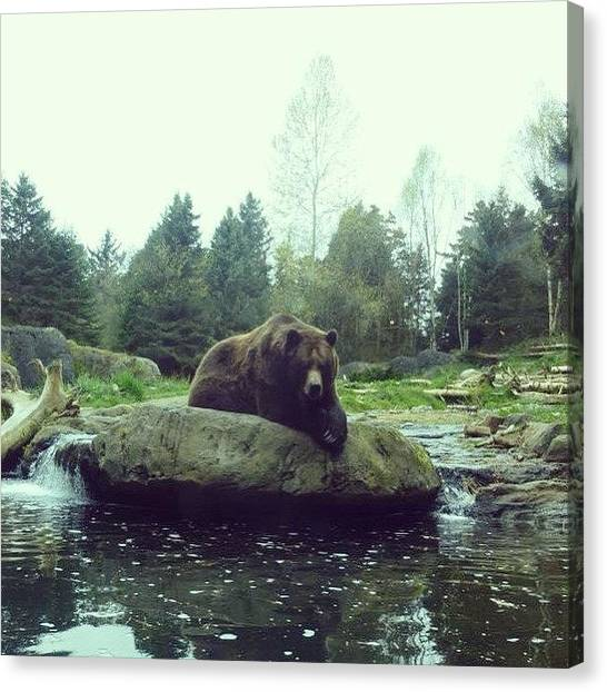 Grizzly Bears Canvas Print - Contemplation by Mikaela Pederson