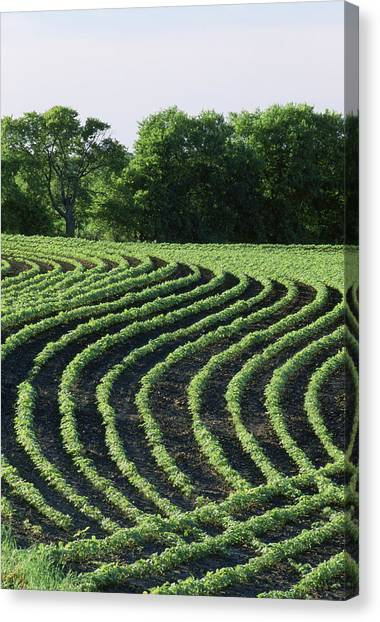 Contour Planted Field Of Young Soybeans (glycine Max). Canvas Print by Inga Spence
