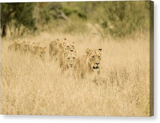 Africa Wildlife Canvas Print - Convoy by Mohammed Alnaser