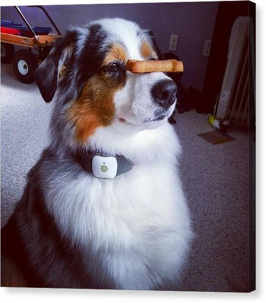 Sparrows Canvas Print - Cookie On The Nose Trick by Sparrow The Dog