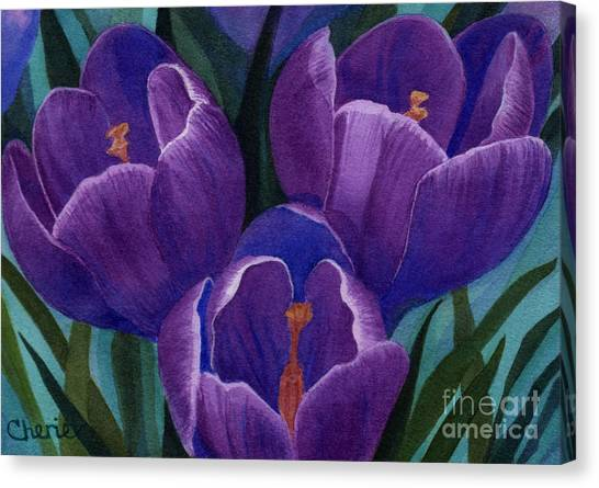 Cool Purple Crocus Canvas Print by Vikki Wicks