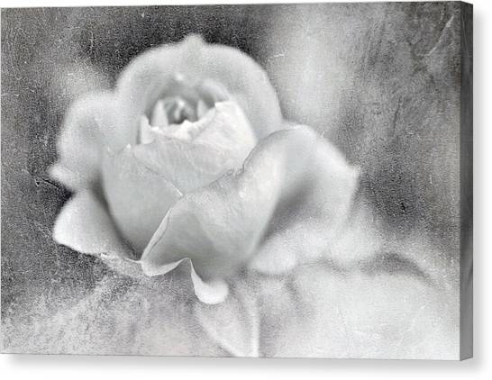 Cool Rose Canvas Print