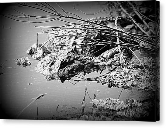 Cooling Off  B W Canvas Print by Sheri McLeroy