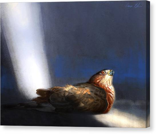 Birds Of Prey Canvas Print - Coopers Hawk by Aaron Blaise