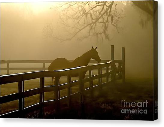 Coosaw Early Morning Mist Canvas Print