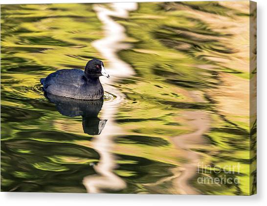 Canvas Print featuring the photograph Coot Reflected by Kate Brown