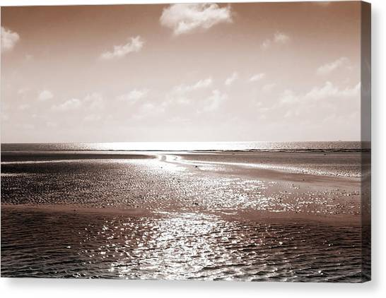 Copper Beach Canvas Print
