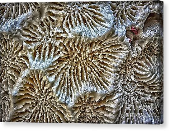 Coral 1 Canvas Print