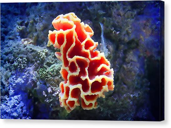 Coral Artistry Canvas Print