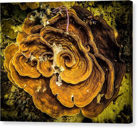 Coral Farming Canvas Print